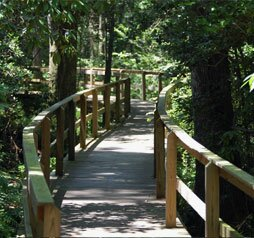 Kalmia Boardwalk